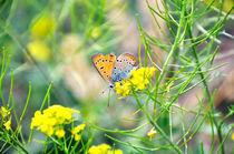 Butterfly 02 by Daria Korotkova