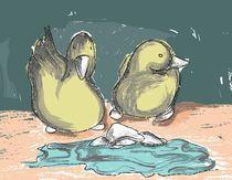 Ducks by Nadja Asghar