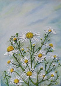 Meine Kamille by G.Elisabeth Willner