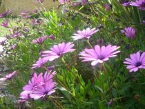 Purple Flowers by Mirela Oprea