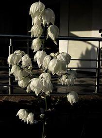 Black & White by Mirela Oprea