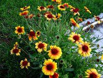 Garden Flowers by Mirela Oprea