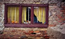 Old window by carollina-rabei