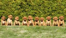 Dogue de Bordeaux PUPPIES von Sanna Södergren