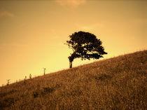 Tree Hill by Kristina Trick