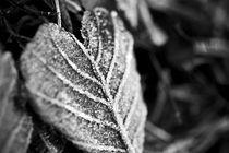Frozen Heart by Amos Edana