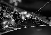 Abstract Webs by Amos Edana