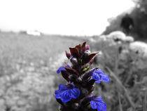 Violet by Anže Sršen