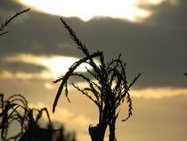 Sunset-1-by-namelessseeker