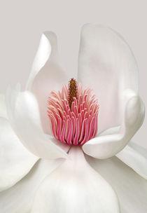 Magnolia von Brian Haslam