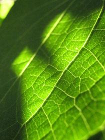 Green spirit by Ana Cristina Valencia