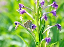 butterfly 03 by Daria Korotkova
