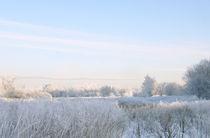 winter morning by Daria Korotkova