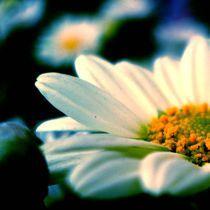 Blom 1 von Peet Wolmarans