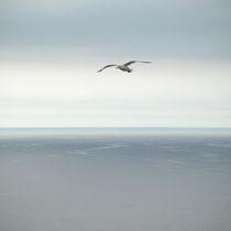 seagull von photoplace