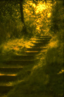 steps in a fairy wood by dresdner