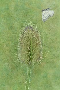 Butterfly von Cornelia Dettmer