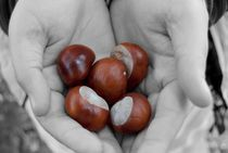 Chestnuts by Andreas Ferber