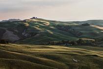 Tuscany - Sheep by Alex Fechner
