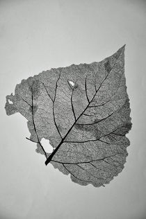 Verfallendes Kunstwerk der Natur von robert-zink