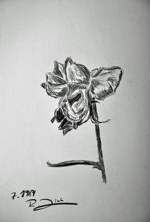 Rose von robert-zink