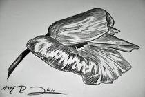 Mohnblüte von robert-zink