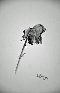 Rose XVII von robert-zink