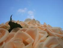 Roses by Charlotte Gorzelak