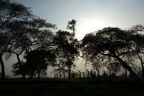 morning_kasambya by Marcel Velký