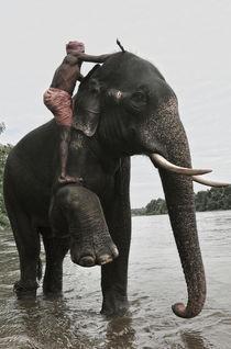 Elephants  by emanuele molinari