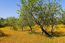 Yellow Carpet of wildflowers in Portugal von Louise Heusinkveld