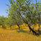 Algarve-olive-grove0108