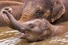 Baby-elephant076