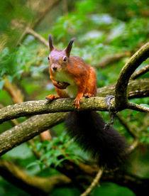 Surprised squirrel von Miha Palir