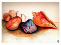 Shells of Summer by Sandra Gale