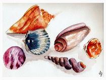 Summer Sea Shells von Sandra Gale