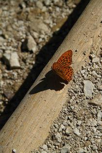 Schmetterling im Sonnenlicht by Stefan Bruett