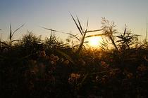 Sonnenuntergang by Stefan Bruett