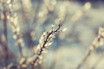 Pastel-de-iarna-by-csaby1-d1sgmqz