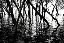 Mangrove Shadows by rhfineartphotography