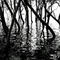 Mangrove-shadows