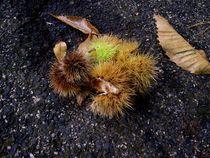 Chestnuts von Mirela Oprea