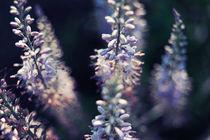 Fleches-bleues-by-csaby1-d2v6c0d