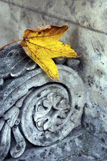 Herbstlaub by lichtbildersalon