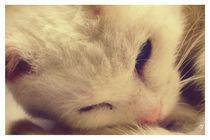 A Very Special Cat von Sybille Sterk