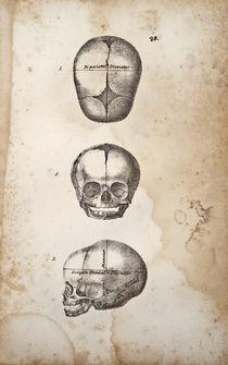Baby Skulls von Mark Strozier