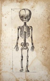 Standing Baby Skeleton von Mark Strozier