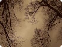 changes in the sky. von Aiste Ališauskaite