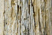 Tree Background by netphotographer