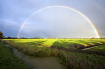Rainbow in  by Johan Wouters